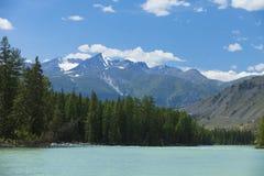 altai日持续山夏天 河Argut 美好的高地横向 russ 免版税图库摄影