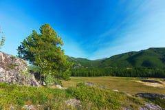 altai日持续山夏天 美好的高地横向 俄国 西伯利亚 免版税库存图片