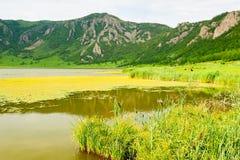 altai湖山俄国 免版税库存图片