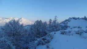 altai Śnieżna zima Zdjęcie Royalty Free