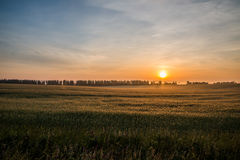 altai śródpolny Russia wschód słońca Zdjęcie Royalty Free