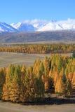 Altai山 图库摄影