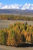 Altai山 库存图片