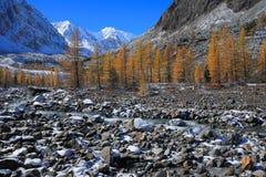 Altai山 免版税图库摄影