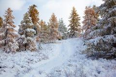 Altai bajo nieve imágenes de archivo libres de regalías