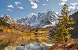 Altai berg, Ryssland, Sibirien royaltyfri bild