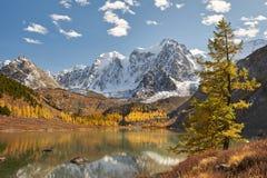 Altai berg, Ryssland, Sibirien royaltyfri foto