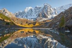 Altai berg, Ryssland, Sibirien arkivfoton