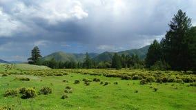 altai Central Altai da beleza Fotografia de Stock Royalty Free
