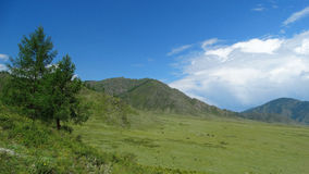 altai Central Altai da beleza Imagem de Stock Royalty Free