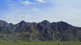 altai duże krajobrazowe halne góry Obrazy Stock