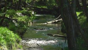 altai Een bergstroom na een regen Magisch landschap van regenwoud en rivier Wilde, levendige vegetatie van bos stock video