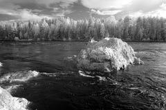 Altai, fiume di Katun, Russia Fotografia Stock