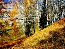Altai-Herbstfarbe Stockbilder