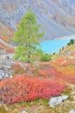 altai jesiennych turkus górski kolorów jeziora Zdjęcie Stock