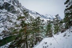 altai katun山河俄国 风景一个的冬天 图库摄影