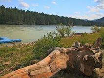 Altai Katun flod Arkivbild