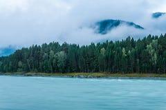 altai katun region rzeczny Russia Siberia Zdjęcie Stock