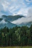 altai katun region rzeczny Russia Siberia Fotografia Royalty Free