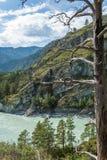 altai katun region rzeczny Russia Siberia Zdjęcie Royalty Free