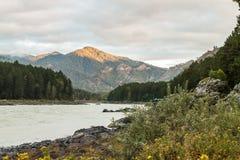 altai katun region rzeczny Russia Siberia Obraz Royalty Free