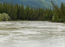 Altai: Katun river Stock Photos