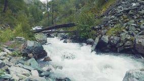 Altai, Kucherla, Rússia - junho, 20, 2018: rio frio da montanha atual Ponto inicial no rio Rochas e árvores Azul claro vídeos de arquivo