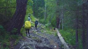 Altai, Kucherla, Russia - June, 20, 2018: Tourists in the Altai forest. Uphill. Adventure and adventure tourism. Altai, Kucherla, Russia - June, 20, 2018 stock footage