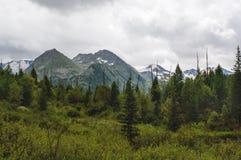 Altai, la Russia, montagne e fiume Fotografia Stock