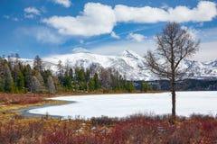 Altai Lake  Kodelyukyol Royalty Free Stock Photography