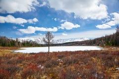 Altai Lake  Kodelyukyol Royalty Free Stock Photo