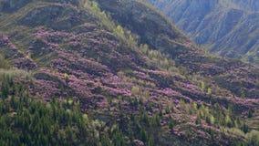 Altai. Landmarks Tracts Kalbak-Tash. Royalty Free Stock Image
