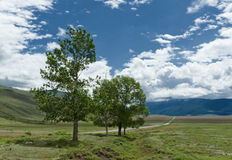 Altai landscape: road steppe trees Royalty Free Stock Images