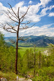Altai landscapes from mountain pass Chike-Taman Royalty Free Stock Images