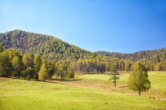 Altai meadows Royalty Free Stock Photo