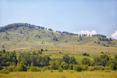 Altai meadows Stock Images
