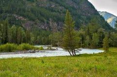 Altai, montagne di Altai, Kucherla River Valley Fotografia Stock