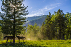 Altai montanhoso fotos de stock royalty free
