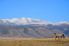 Altai Mountains Stock Photography