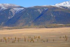 Altai Mountains Stock Images