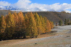 Altai Mountains Stock Image