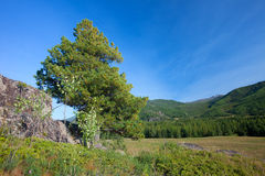 Altai mountains. Beautiful highland landscape Stock Images