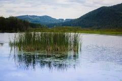 Altai mountains Royalty Free Stock Photo
