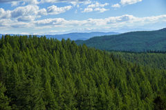 Altai mountains forest landscape in Ulagan Highlands Royalty Free Stock Photography