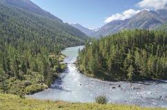 Altai Mountains. Royalty Free Stock Image