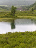Altai mountains lake tree Royalty Free Stock Photography