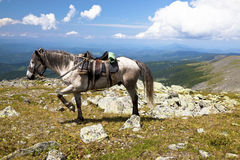 Landscapes of Altai mountains. Horse tourism Stock Image
