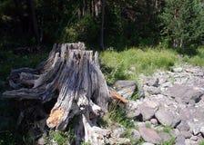 Altai Royalty Free Stock Photo
