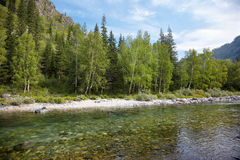 Altai river Kumir Royalty Free Stock Image