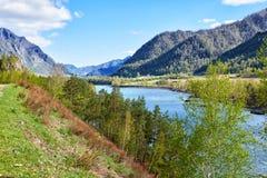 Altai rzeczny Katun blisko górskiej wioski Chemal, Rosja Obrazy Royalty Free